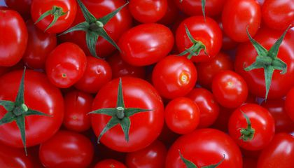 Tomatoes Have Legally Been Vegetables Since 1893