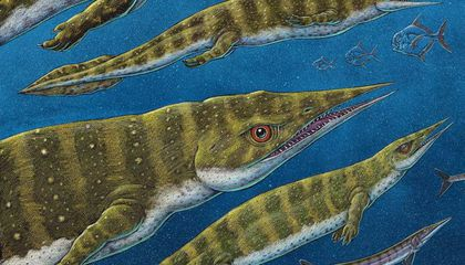 215-Million-Year-Old, Sharp-Nosed Sea Creature Was Among the Last of Its Kind