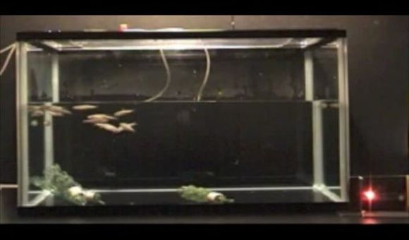 Preview thumbnail for video'Understanding What Makes Fish Flee