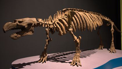 Sea Cows Used To Walk on Land in Africa And Jamaica