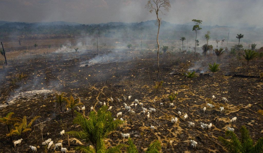 Much of the burning is linked to deforestation, and sometimes the fire spreads beyond land being torched for agriculture into the surrounding forest.