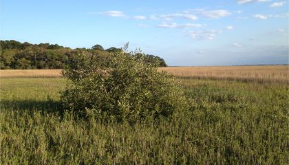 Fewer Freezes Let Florida's Mangroves Move North
