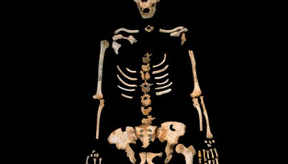 Scientists Just Sequenced the DNA From A 400,000-Year-Old Early Human
