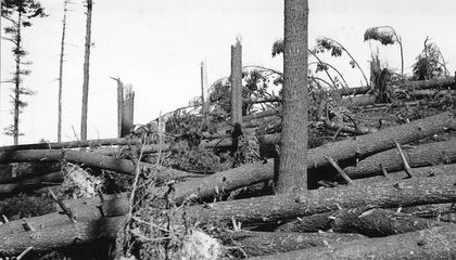 The 1938 Hurricane That Revived New England's Fall Colors