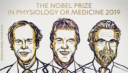 Nobel Prize in Medicine Awarded to Scientists Who Revealed How Cells Respond to Different Oxygen Levels