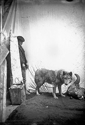 Studio portrait of a wolf and a boy holding a chain connected to a wolfs collar