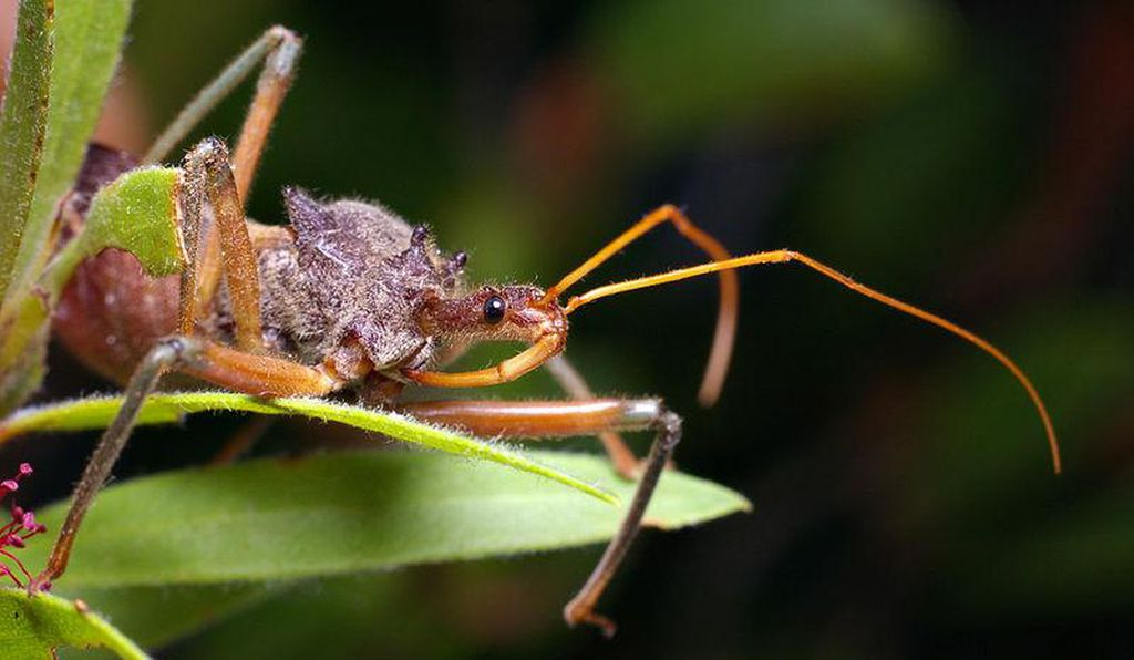 Pesticides will banish valuable pollinators from your garden. Consider instead introducing additional insects, such as the assassin bug (pictured), to keep pests in check.