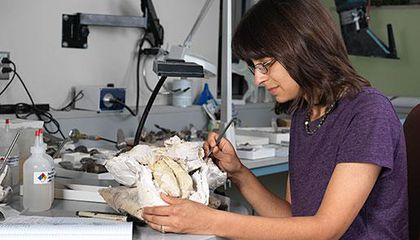 Image: Giving fossils a facelift
