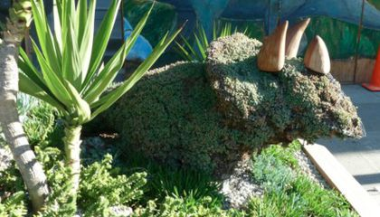 Dinosaur Sighting: Triceratops Topiary
