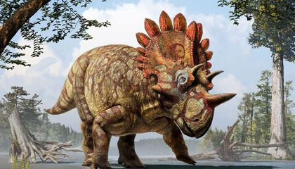 The 'Hellboy' Dinosaur, a New Cousin of Triceratops, Is Fossil Royalty