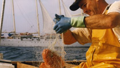 How a Fallback to Historic Traditions Might Save Catalonia's Red Shrimp Fishery