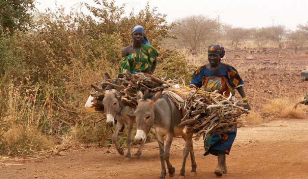 Women spend less time retrieving firewood when trees are nearer to their land.