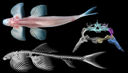 Study Finds Ten Species of Fish That May Have a Secret Talent for Walking on Land