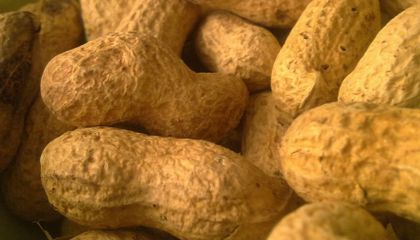 The Legumes of War: How Peanuts Fed the Confederacy