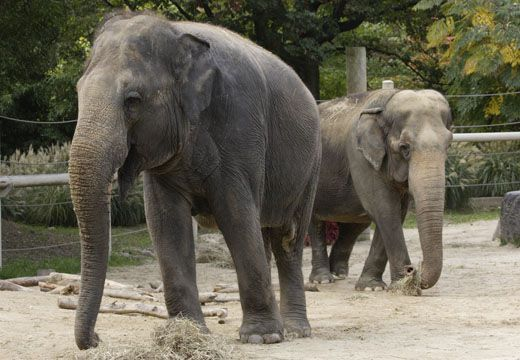 National-Zoo-Elephants01.JPG