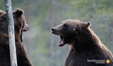 Stunning Footage of Two Bears Duking It Out for Dominance