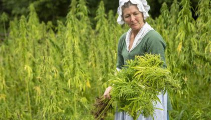 Hemp Makes a Return to George Washington's Farm