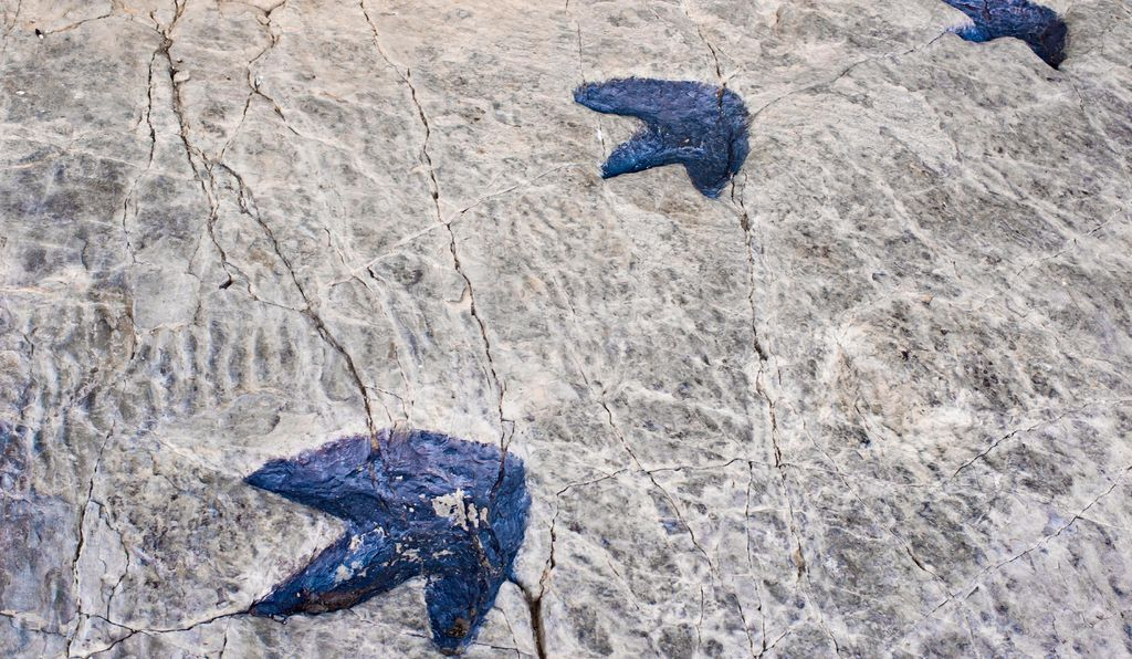 Fossilized dinosaur footprints found in La Rioja, Spain.