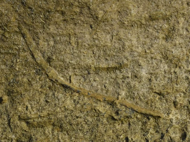 A fossil showing a tunnel made by ancient burrowing worms
