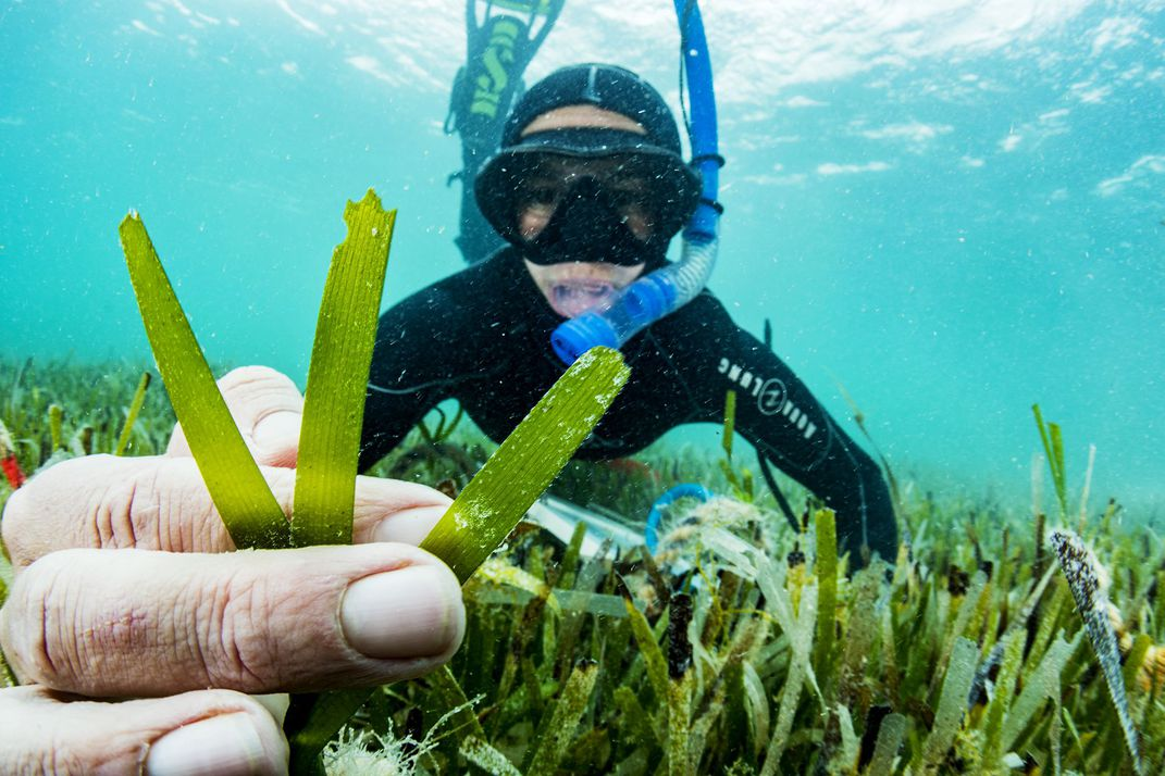 A diver underwater holding sea grass.