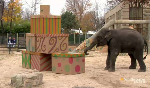Preview thumbnail for video'An Adorable Birthday Party for a Baby Elephant