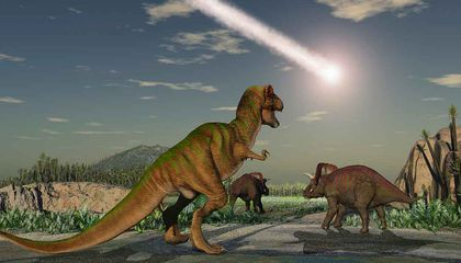 Life Bounced Back After the Dinosaurs Perished