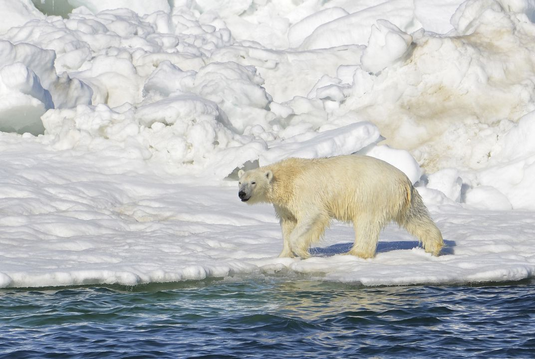 Polar bear habitat protected