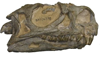 After 30 Years, a South African Dinosaur Is Identified as a New Species