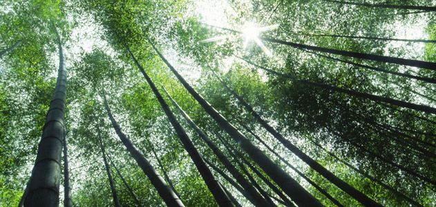 Bamboo Steps Up | Science | Smithsonian