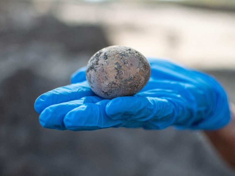 Intact chicken egg found in Israel
