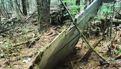 In a Remote Forest, Traces of a 50-Year-Old Mystery