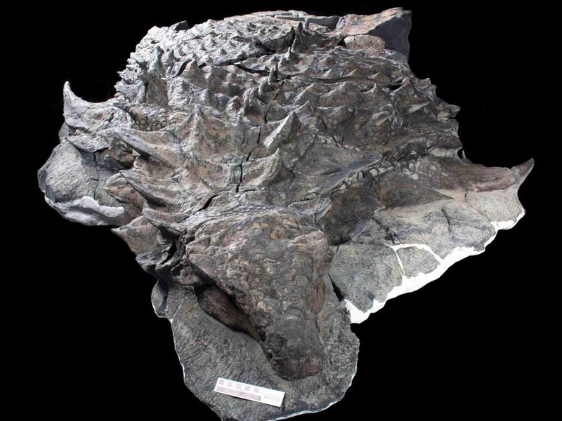 "Was the ""Sleeping Dragon"" Dinosaur a Red Head?"