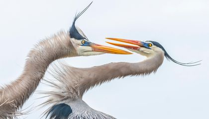 Audubon Photography Award Winners Show the Breathtaking Beauty of Wild Birds