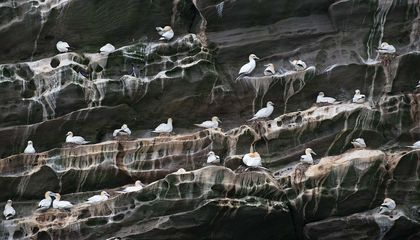 Seabird Poop Is Worth More Than $1 Billion Annually