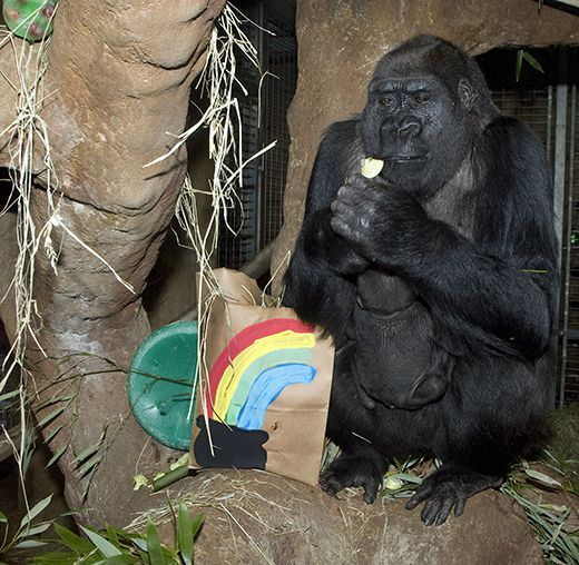 Zoo's Great Apes Get Jiggy With It On St. Patrick's Day
