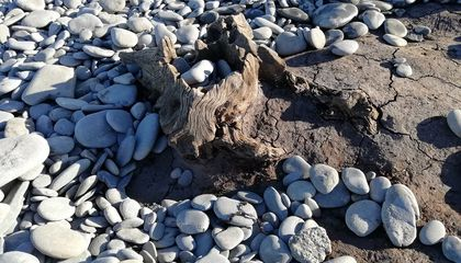 New Section of Petrified Forest Uncovered on Wales Beach After Storm