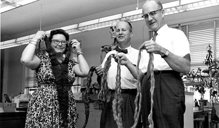 Smithsonian anthropologists hold up the world's longest beard after it was donated to the National Museum of Natural History in 1967. (Smithsonian)
