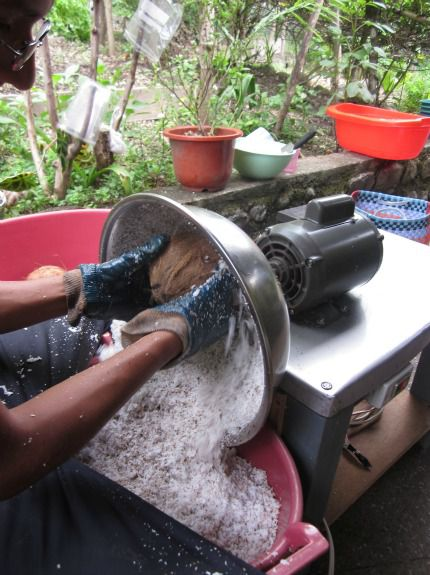 Coconuts are ground into shavings half a nut at a time.