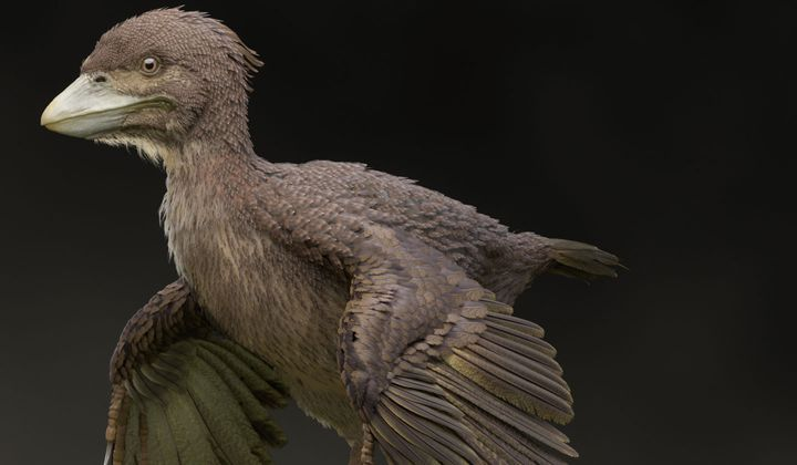 Fossil Fills in Gap Between Dinos and Early Birds