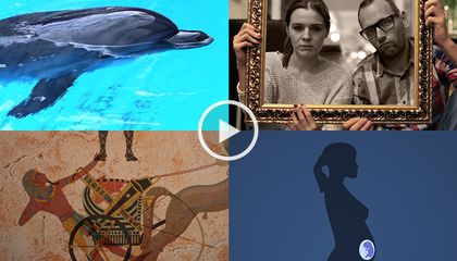 Our Answers to the Most Burning Questions of 2014