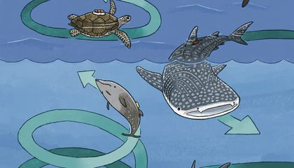Researchers Are Investigating Why Marine Animals Swim in Perplexing Circles