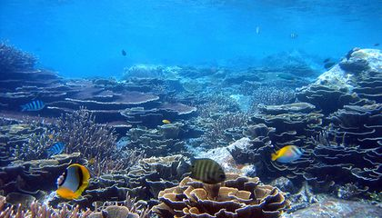 A Mysterious Disease Is Killing Corals