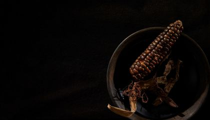 What Ancient Maize Can Tell Us About Thousands of Years of Civilization in America
