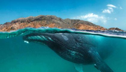 Humpback Whales in the Arabian Sea Have Been Isolated for 70,000 Years