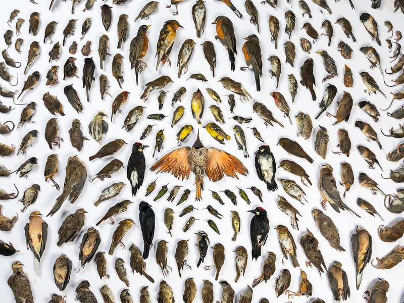 Photographer beautifully displays 232 animals killed by cats