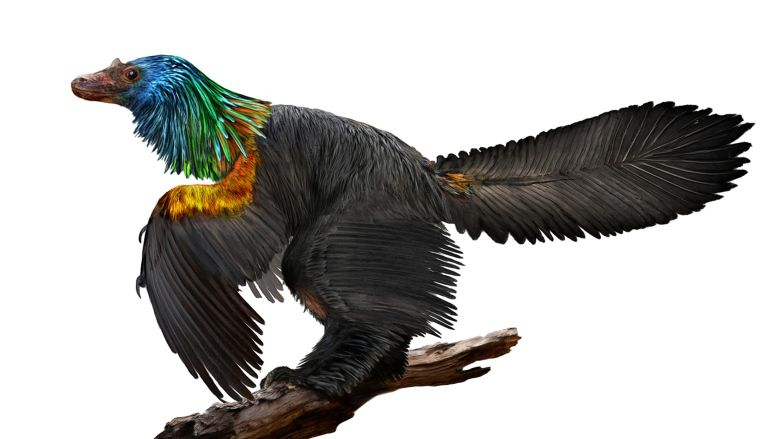 Scientists discover bird-like dinosaur from China had 'rainbow' feathers