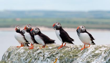 How Bird Poop Could Help Keep the Arctic Cool