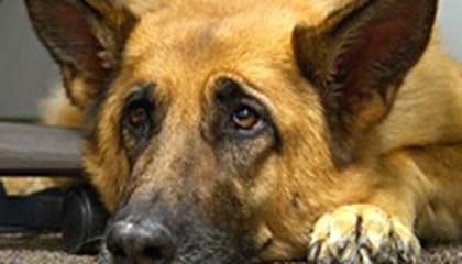 Image: Therapy dog helps soldiers cope with stress