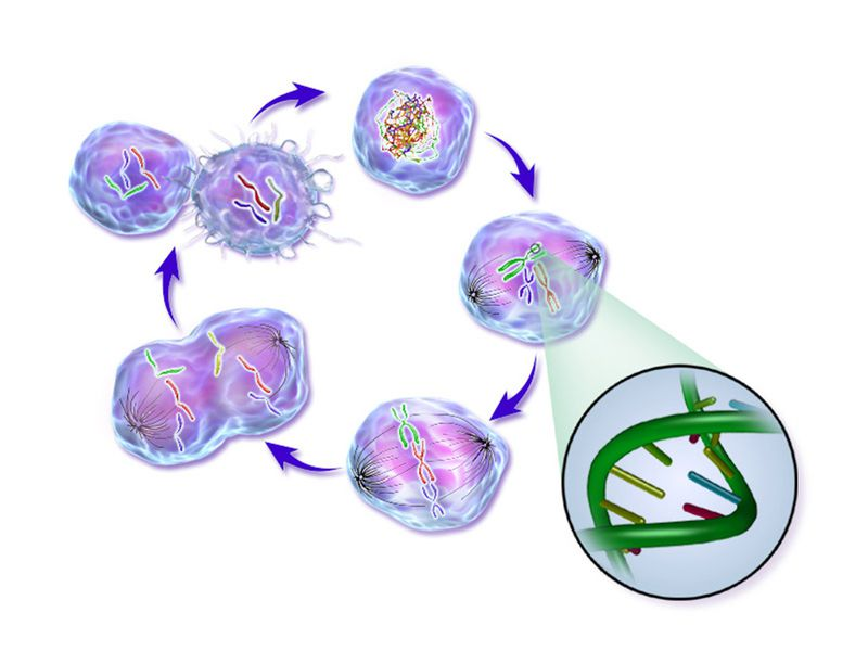 An illustration depicting the life cycle of a cancer cell