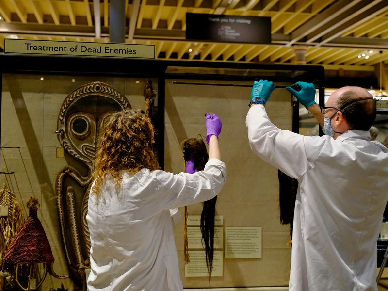 Two people in white lab coats and gloves; left, person with curly hair, and right, person with short balding hair, are in the process of removing tsantsa, small fist-sized skulls with long hair, from the display case